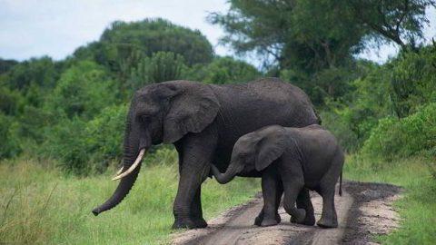 Elephant-human conflict reaches dangerous levels