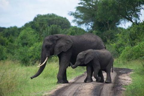 Elephant-human conflict reaches dangerous levels